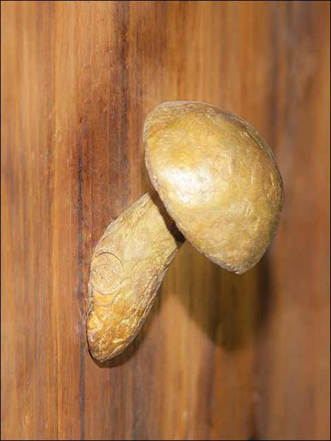 pomos y tiradores bronce- Pomo Seta
